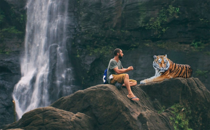 tiger-3158635