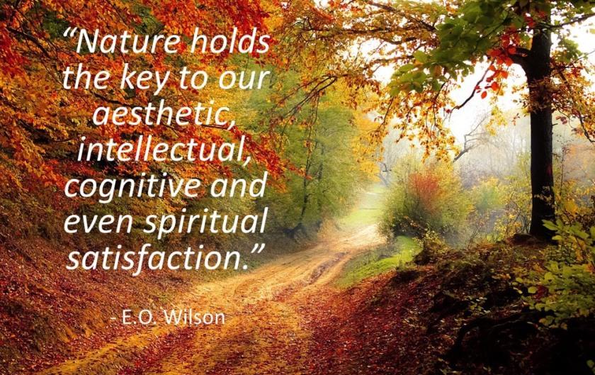 E.O. Wilson quote